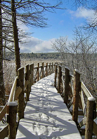 Snow covered boardwalk at Limerick Forest