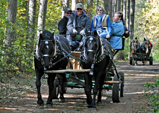 Horse-drawn wagon ride through Limerick Forest