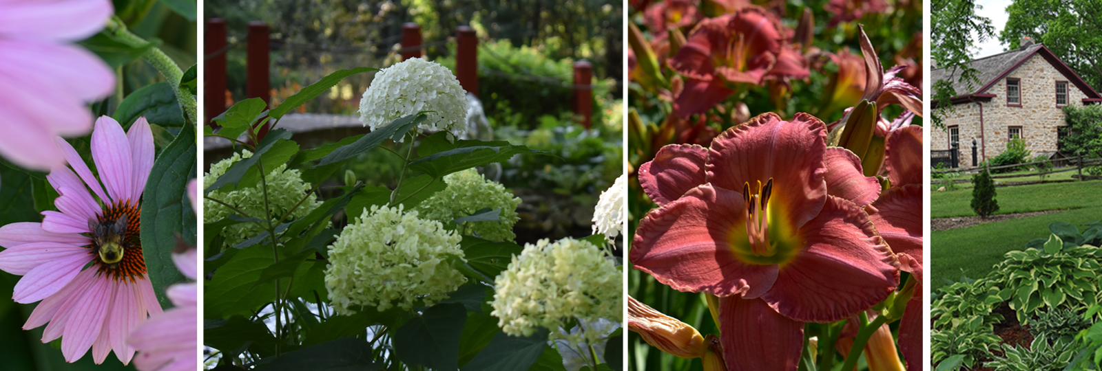 Collage of flowers in various gardens
